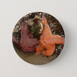 Bóton Redondo 5.08cm Foto da estrela do mar do foto a cores 3/estrela