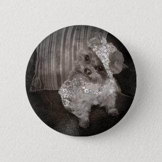 Bóton Redondo 5.08cm Foto velha de Yorkie do Teacup