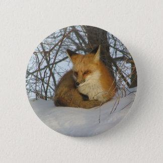 Bóton Redondo 5.08cm Fox de descanso