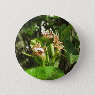 Bóton Redondo 5.08cm Galho da árvore de pera com os botões no primavera