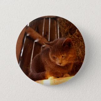 Bóton Redondo 5.08cm Gato do celeiro
