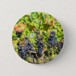 Bóton Redondo 5.08cm Grupos azuis de suspensão da uva no vinhedo
