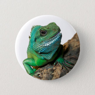 Bóton Redondo 5.08cm Iguana verde
