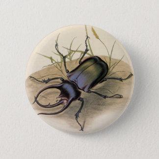 Bóton Redondo 5.08cm Insetos do vintage e insetos, besouro de
