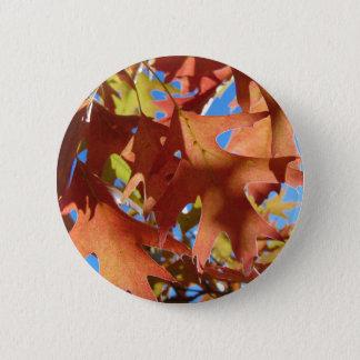Bóton Redondo 5.08cm Luz solar através das folhas de outono