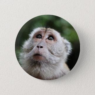 Bóton Redondo 5.08cm Macaco que olha aos céus