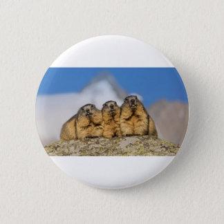 Bóton Redondo 5.08cm Marmota alpinas
