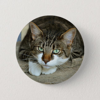 Bóton Redondo 5.08cm Os olhos de gato