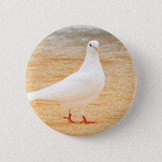 Bóton Redondo 5.08cm Pássaro branco bonito do pombo