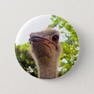 Bóton Redondo 5.08cm Pássaro da avestruz