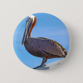 Bóton Redondo 5.08cm Pelicano outra vez