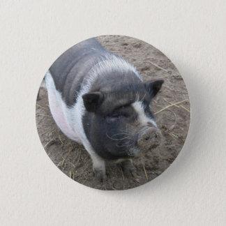Bóton Redondo 5.08cm Porco inchado pote