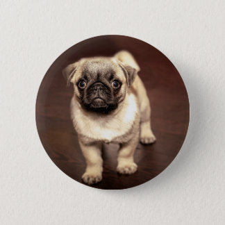 Bóton Redondo 5.08cm Pug bonito do filhote de cachorro, cão, animal de