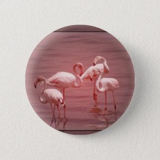 Bóton Redondo 5.08cm Quatro flamingos de congregação