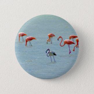 Bóton Redondo 5.08cm Rebanho cinzento e cor-de-rosa dos flamingos no