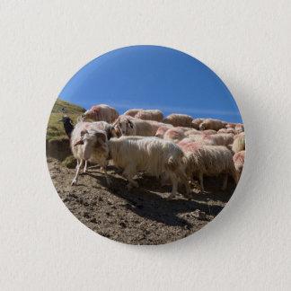 Bóton Redondo 5.08cm Rebanho de carneiros do Bearnaise de Basco na