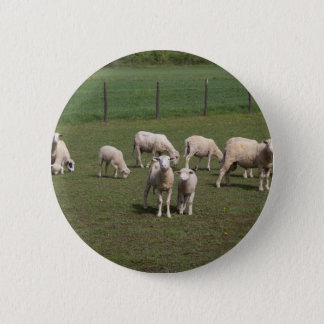 Bóton Redondo 5.08cm Rebanho dos carneiros