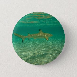 Bóton Redondo 5.08cm Shark in bora bora