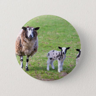 Bóton Redondo 5.08cm Sira de mãe a carneiros com os dois cordeiros