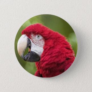 Bóton Redondo 5.08cm Sr. Macaw