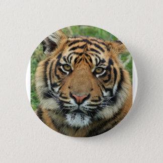 Bóton Redondo 5.08cm Tigre adulto
