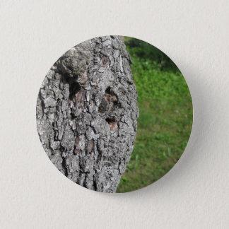 Bóton Redondo 5.08cm Tronco de árvore da pera contra o fundo verde