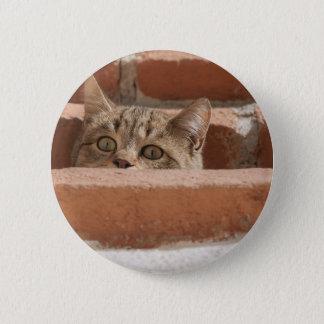 Bóton Redondo 5.08cm Wildcat novo curioso da atenção dos olhos de gato