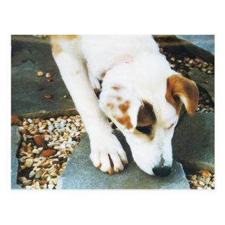 BQ cartão ronco bonito do cão da mistura