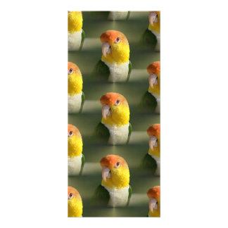 Branco bonito papagaio inchado do Caique 10.16 X 22.86cm Panfleto