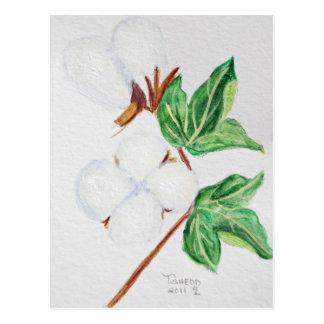 Branco botânico do cartão da cápsula do algodão
