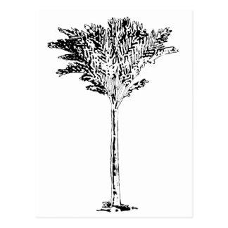 Branco da palmeira 2 os presentes de Zazzle do Cartoes Postais