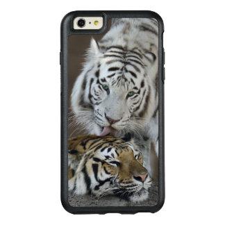 Branco e descanso dos tigres de Brown