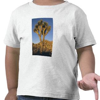 Brevifolia da árvore, da mandioca de Joshua), e Tshirts