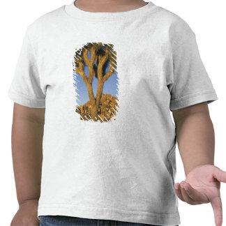 Brevifolia da árvore, da mandioca de Joshua), e Tshirt