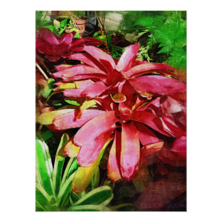 bromeliad tropical, jardins tropicais de Fairchild Posters
