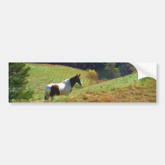 Brown e cavalo branco por árvores do outono adesivo para carro