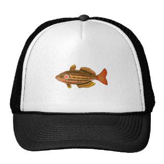 Brown listrou peixes boné