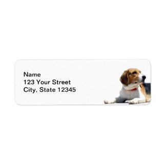 Brown preto e endereço do remetente branco do cão etiqueta endereço de retorno