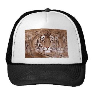 Brown tonifica a cara do tigre boné