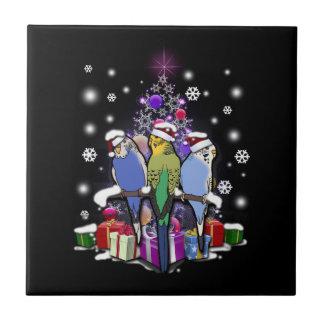 Budgerigars com presente e flocos de neve do Natal