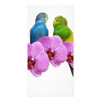 Budgie com orquídea roxa cartão