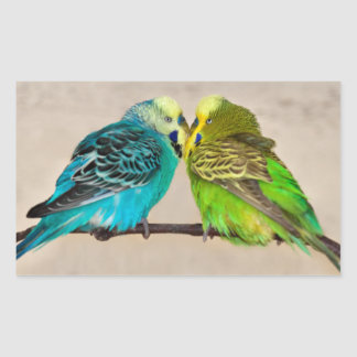 Budgies na etiqueta do amor