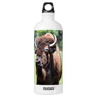 Búfalo (bisonte)