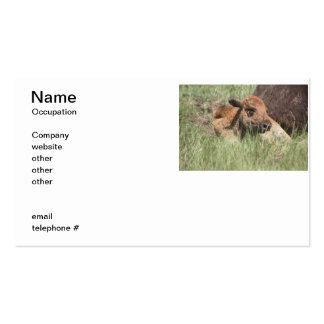 Búfalo do bebê cartão de visita