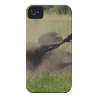 Búfalo no campo capa para iPhone 4 Case-Mate