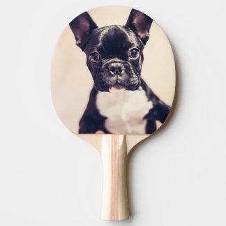 Buldogue francês raquete de ping-pong