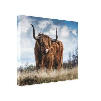Bull Impressão Em Canvas