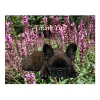 Bulldogs franceses cartão postal Thank You