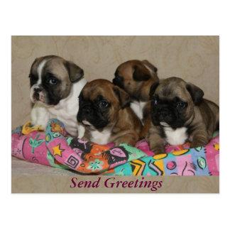 Bulldogs franceses cartões postais