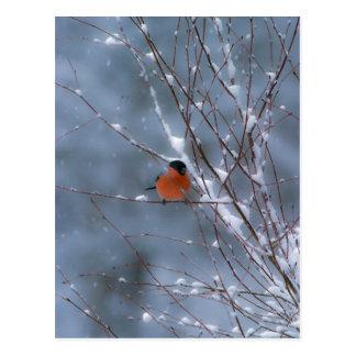 Bullfinch masculino no cartão da neve